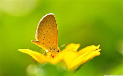 Sfondi Farfalle (62+ Immagini