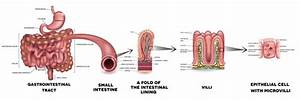 3 Parts Of Large Intestine In Order