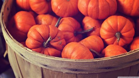 Desktop Fall Backgrounds Pumpkins by Autumn Pumpkin Wallpaper 47 Images