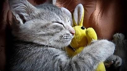 Cats Super Wallpapers Cat Desktop Kitten Kittens