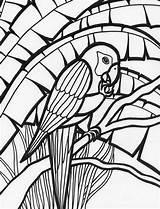 Parrot Coloring Rainforest Amazing Adult Colouring Birds Parrots Adults Bird Mosaic Animal Colornimbus Explore sketch template