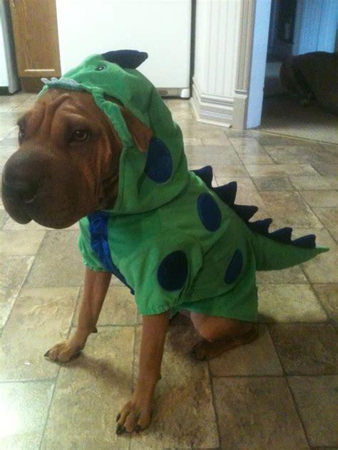 winners  earthbaths facebook halloween costume contest
