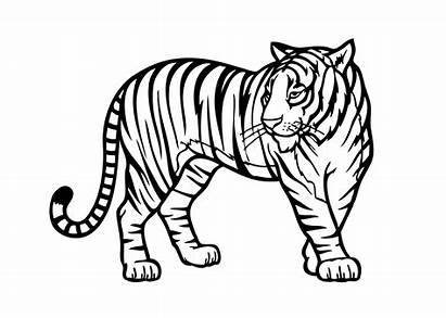 Coloring Pages Animals African Safari Clipart Colouring