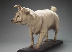Now-Extinct Dog Breeds You Probably Never Heard Of – Wow ...