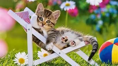 Summer Cat Wallpapers Cats Spring Fond Kitten
