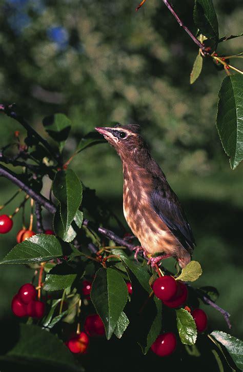 creating  bird friendly habitat   farmers almanac
