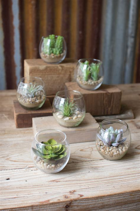set of 6 succulents with glass containers