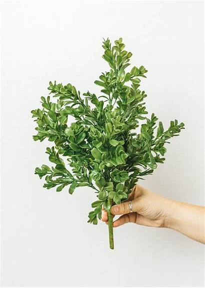 Boxwood Bush Artificial Tall Indoor Afloral