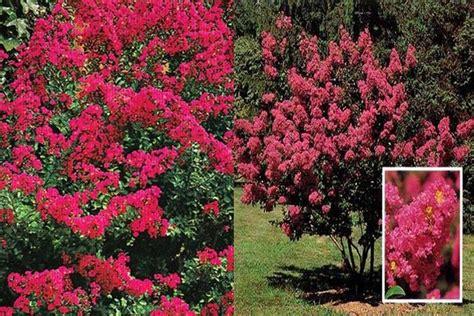 arbuste rustique nimes design
