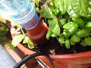Blumenkästen Mit Bewässerung : erfahrungsbericht bew sserung mit aufs tzen f r pet ~ Lizthompson.info Haus und Dekorationen