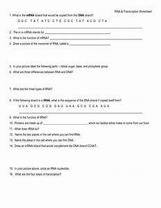 26 Holt Biology Dna Rna And Proteins Worksheet Answers