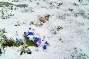 Enzian Schneiden Und überwintern : enzian berwintern so sch tzen sie die pflanze im winter ~ Lizthompson.info Haus und Dekorationen