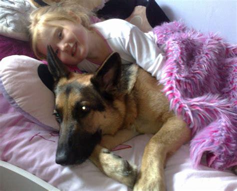 German Shepherd Dog Rescue