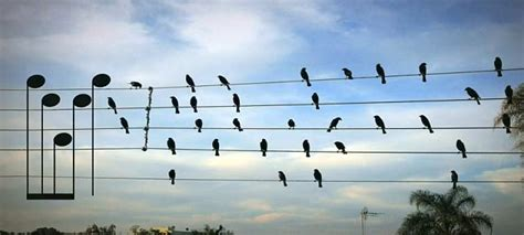 Album · 2008 · 10 songs. Birds on the wire song strikes a chord with listeners   Daily Mail Online