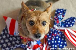 Caption this dog: Hooray for the red, white & cute! | I ...