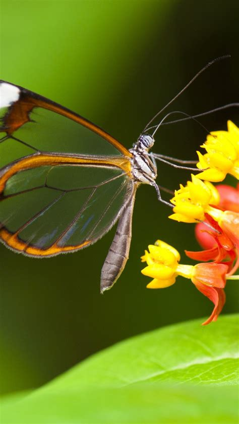 Butterfly Home Screen Wallpaper Images by Wallpaper Butterfly 5k 4k Wallpaper Insects Flowers