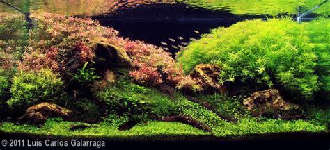 Aga Aquascaping Contest by 2011 Aga Aquascaping Contest 17