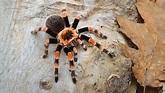 What Are Arachnids? - WorldAtlas.com