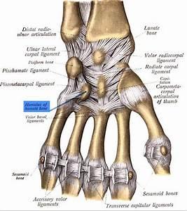 Ben Roethlisberger U0026 39 S Hamate Bone