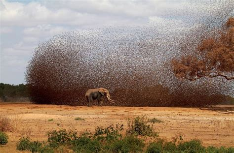 National Geographic Photo Contest 2012 (50 Pics