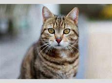 Katzenbilder Tier Fotos Katzen Bilder Lustig Litle Pups