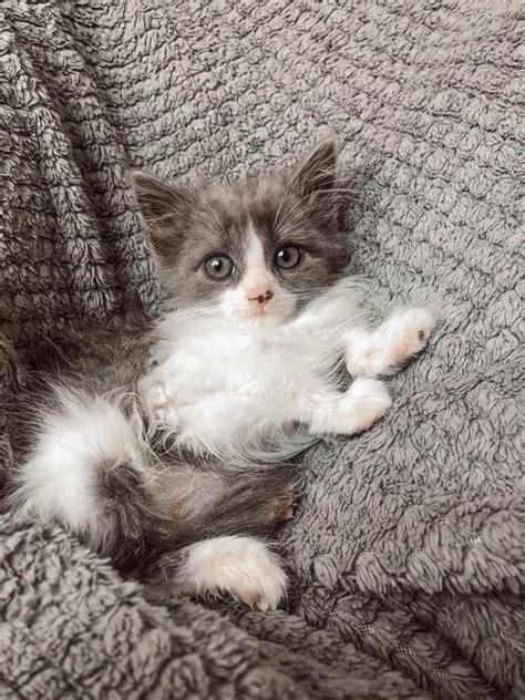 PP.lv Dzīvnieki Kaķi, kaķēni: ADOPTĒTI!! Māsiņa un ...
