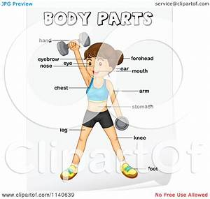 Cartoon Of A Woman Weightlifting With Labeled Body Parts