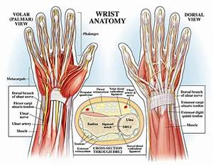 Prevent Yoga Injury  3 Essential Tips For Protecting Your Wrists In Yoga