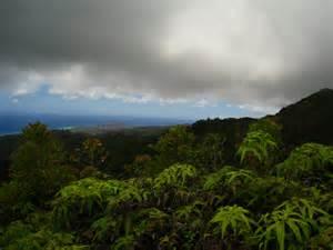 Hawaii Tropical Rainforest Climate