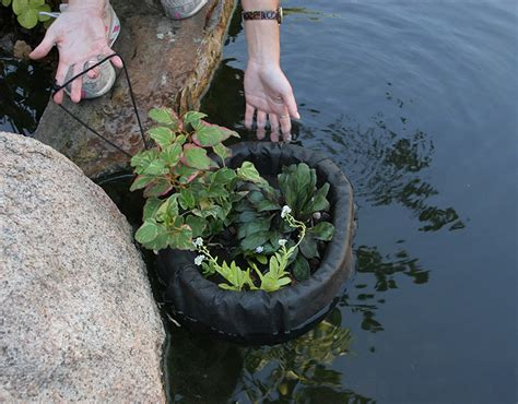 aquascape  introduces  floating plant island pond