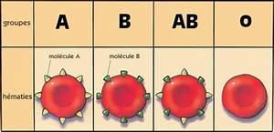 Type A Ou Ac : partie ii transfusion sanguine ~ Dailycaller-alerts.com Idées de Décoration
