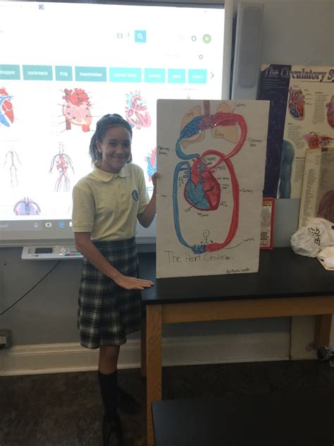 circulatory system project good shepherd school