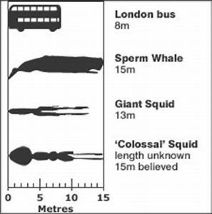 Giant Squid - Masters of the Ocean - Broke-Ass Stuart's ...