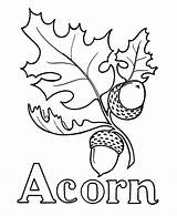 Acorn Coloring Pages Drawing Oak Leaf Printable Line Leaves Wood Burning Pre Template Acorns Tree Sheet Patterns Alphabet Pattern Drawings sketch template