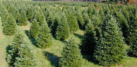 evergreen christmas tree farm photo albums fabulous