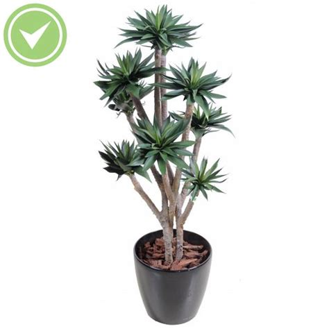 plante interieur pas cher grande plante interieur pas cher maison et fleurs