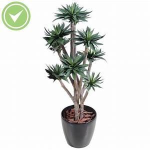 Plante D Intérieur Haute : charmant idees de decoration d interieur 14 plante ~ Premium-room.com Idées de Décoration
