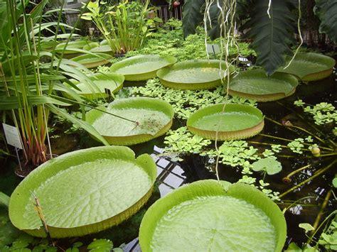 Botanischer Garten Jena Foto & Bild  Naturkreativ, Natur