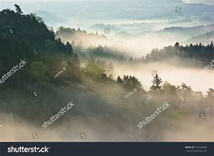 Morning View Into Landscape Full Of Fog And Tree Tops ...