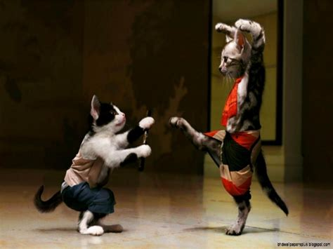 fighting funny cats photography full image