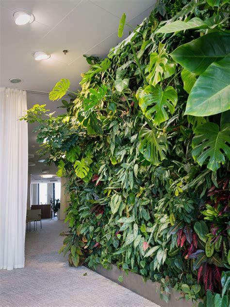 vertical plants indoor gardens growing vertically houseplants garden houseplant gardening indoors advantage gardeningknowhow