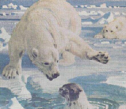 polar bear  polar bear  adapted   arctic climate