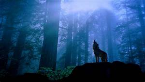 Wolf Wallpapers 1920x1080 - Wallpaper Cave