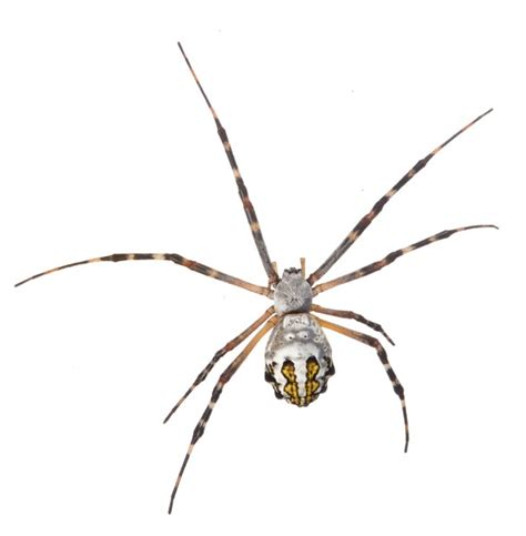 Florida Backyard Spiders by Florida Garden Spider