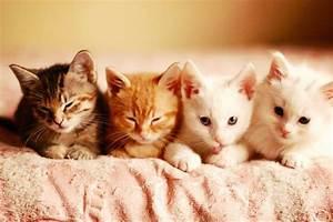 Bringing Kitten Home: Essential Kitten Supplies For A ...