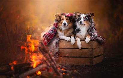 Fire Dogs Together Beauty Paws Mood Blanket