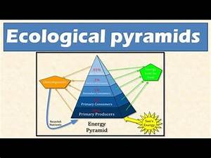Image Gallery ecological pyramid