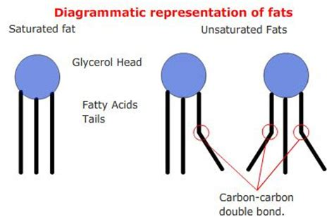 main nutrients carbohydrates fats  proteins