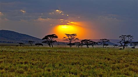 1920x1080 Sunset Trees Gras Field Africa Desktop Pc And
