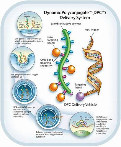Delivery System Dynamic Arrowhead Pharmaceuticals Inc